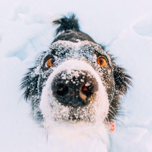 Mal Bilder Hunde Für Facebook - Mal Bilder Hunde Für Facebook