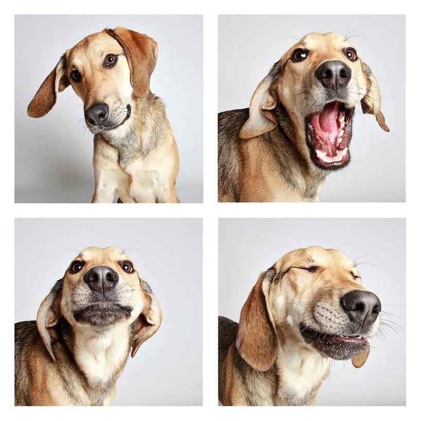 Mal Bilder Hunde Kostenlos Herunterladen - Mal Bilder Hunde Kostenlos Herunterladen