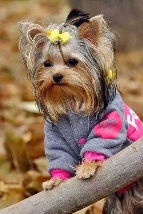 Malibu Hunderasse - Malibu Hunderasse