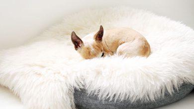 Mein Hund 390x220 - Mein Hund