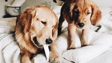 Mini Hunde Bilder 390x220 - Mini Hunde Bilder