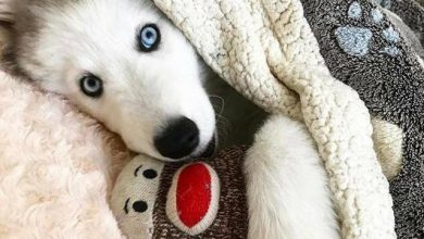 Mini Hunde Bilder Für Whatsapp 390x220 - Mini Hunde Bilder Für Whatsapp