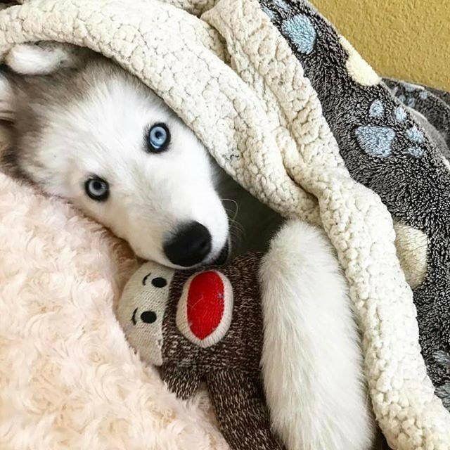 Mini Hunde Bilder Für Whatsapp - Mini Hunde Bilder Für Whatsapp