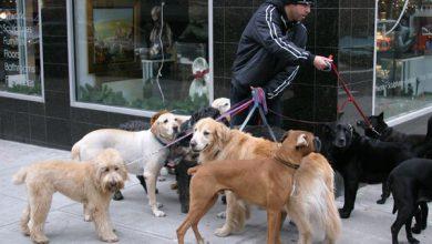 Mini Hunde Bilder Kostenlos Herunterladen 390x220 - Mini Hunde Bilder Kostenlos Herunterladen