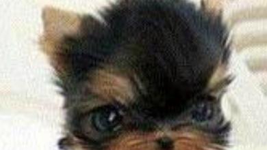 Mischlingshunde Bilder Für Facebook 390x220 - Mischlingshunde Bilder Für Facebook