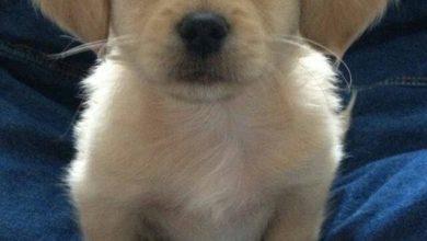 Mischlingshunde Bilder Kostenlos Herunterladen 390x220 - Mischlingshunde Bilder Kostenlos Herunterladen