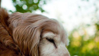 Mischlingshunde Mit Bild 390x220 - Mischlingshunde Mit Bild