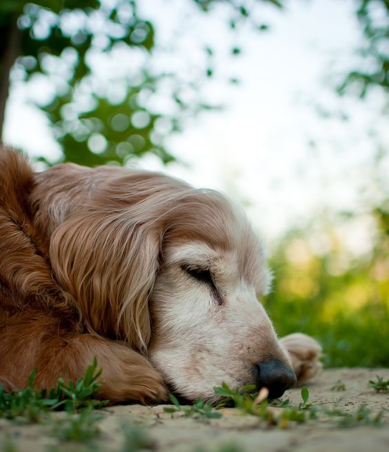 Mischlingshunde Mit Bild - Mischlingshunde Mit Bild