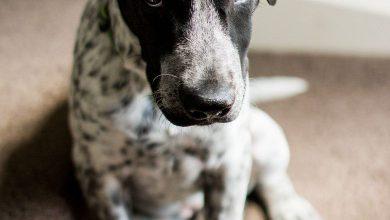 Mischlingshunde Rassen 390x220 - Mischlingshunde Rassen
