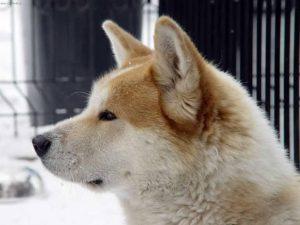 Mittelgroße Hunde Langhaar 300x225 - Mittelgroße Hunde Langhaar