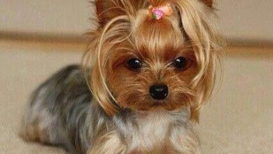 Mittelgroße Hunderassen Liste Mit Bild 390x220 - Mittelgroße Hunderassen Liste Mit Bild