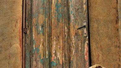 Mittelgrosse Hunderassen Übersicht 390x220 - Mittelgrosse Hunderassen Übersicht