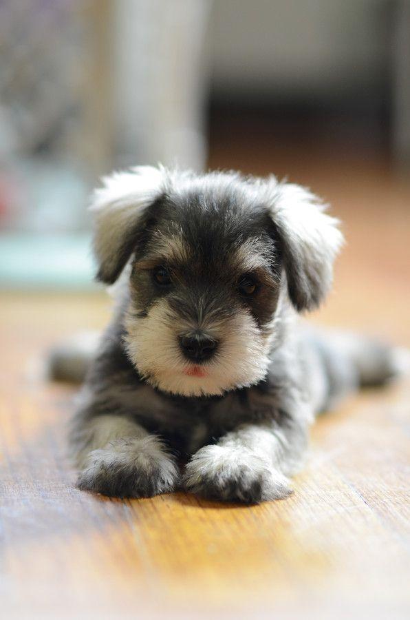 Neue Hunderassen - Neue Hunderassen