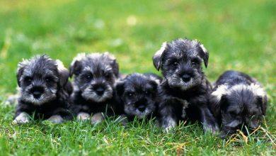 Niedliche Hunde Bilder 390x220 - Niedliche Hunde Bilder