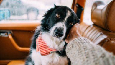 Niedliche Hunde Bilder Für Facebook 390x220 - Niedliche Hunde Bilder Für Facebook