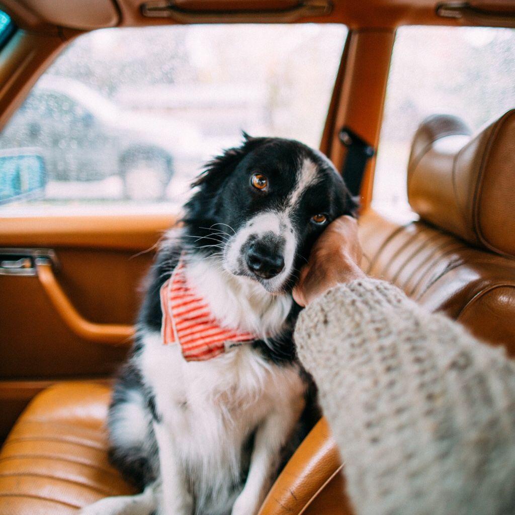 Niedliche Hunde Bilder Für Facebook - Niedliche Hunde Bilder Für Facebook