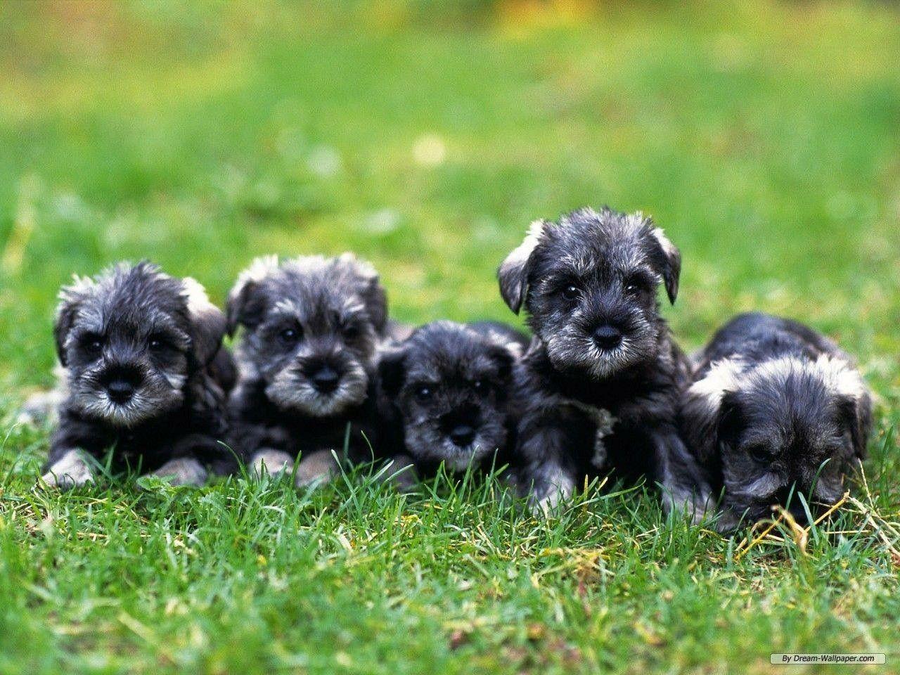 Niedliche Hunde Bilder - Niedliche Hunde Bilder