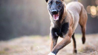 Niedliche Hundebilder Für Facebook 390x220 - Niedliche Hundebilder Für Facebook