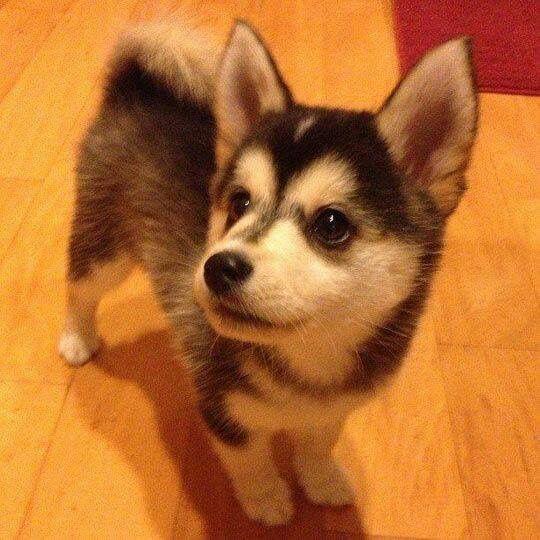 Niedliche Hundebilder - Niedliche Hundebilder