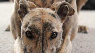 Nilpferd Und Hund 390x220 - Nilpferd Und Hund