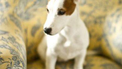 Pitbull Hund Bilder Für Whatsapp 390x220 - Pitbull Hund Bilder Für Whatsapp