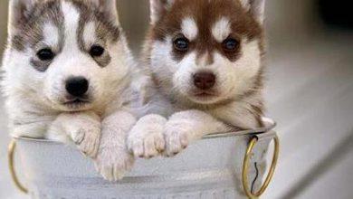 Pitbull Hund Bilder Kostenlos 390x220 - Pitbull Hund Bilder Kostenlos