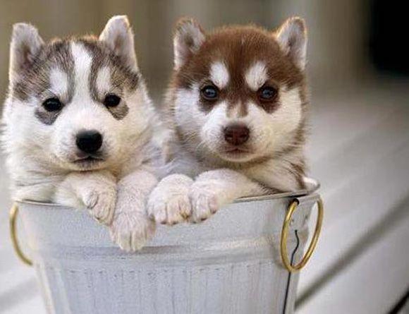 Pitbull Hund Bilder Kostenlos - Pitbull Hund Bilder Kostenlos