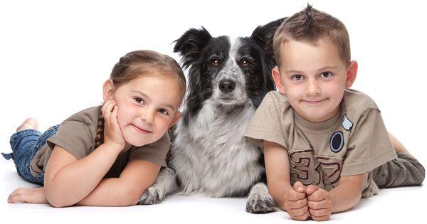 Pitbull Hund Bilder - Pitbull Hund Bilder