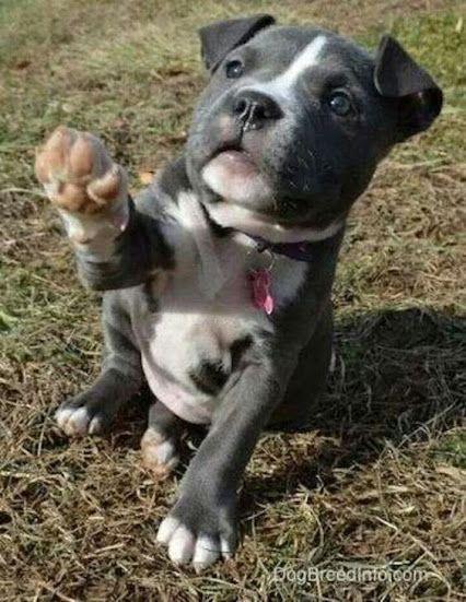 Rassen Von Hunden - Rassen Von Hunden