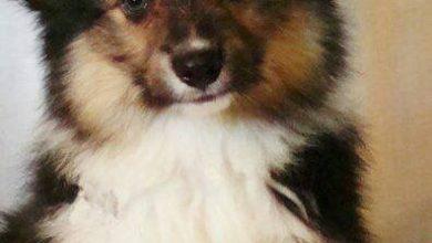 Ruhige Hunderassen 390x220 - Ruhige Hunderassen