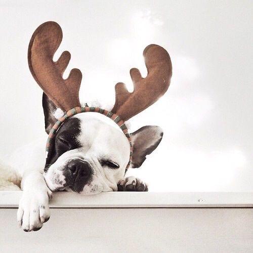 Süße Bilder Von Hunden Kostenlos Herunterladen - Süße Bilder Von Hunden Kostenlos Herunterladen