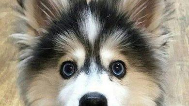 Süße Hunde Bilder Für Facebook 390x220 - Süße Hunde Bilder Für Facebook
