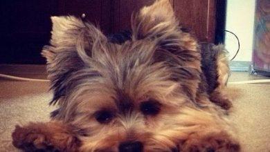 Süße Hunde Bilder Kostenlos Für Facebook 390x220 - Süße Hunde Bilder Kostenlos Für Facebook