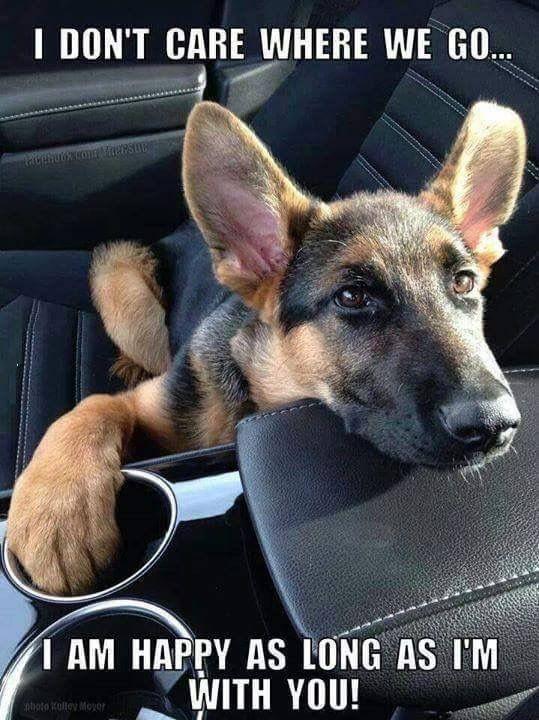 Süße Hunde Bilder Kostenlos Für Whatsapp - Süße Hunde Bilder Kostenlos Für Whatsapp