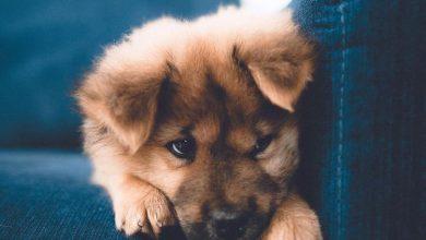 Süße Hunde Bilder Kostenlos Herunterladen 390x220 - Süße Hunde Bilder Kostenlos Herunterladen