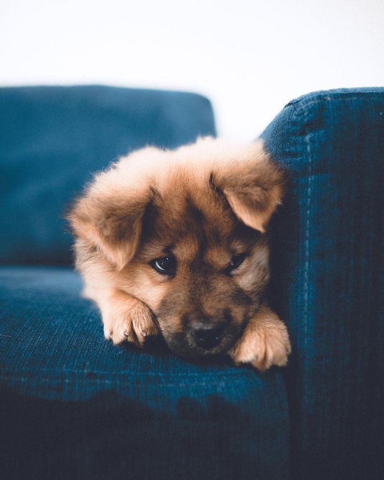 Süße Hunde Bilder Kostenlos Herunterladen - Süße Hunde Bilder Kostenlos Herunterladen