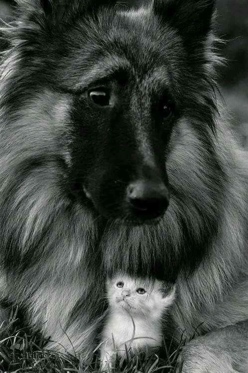 Süße Hunde Bilder Kostenlos - Süße Hunde Bilder Kostenlos
