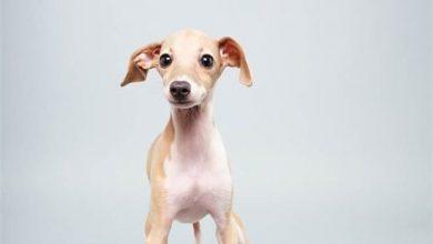 Süße Hunde Bilder Zum Ausdrucken 390x220 - Süße Hunde Bilder Zum Ausdrucken