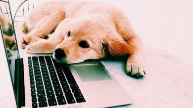 Süße Hunde Bilder Zum Ausdrucken Für Facebook 390x220 - Süße Hunde Bilder Zum Ausdrucken Für Facebook