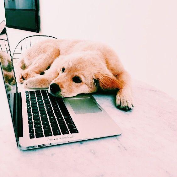 Süße Hunde Bilder Zum Ausdrucken Für Facebook - Süße Hunde Bilder Zum Ausdrucken Für Facebook