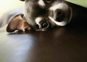 Süße Hunde Bilder Zum Ausdrucken Für Whatsapp 306x220 - Süße Hunde Bilder Zum Ausdrucken Für Whatsapp