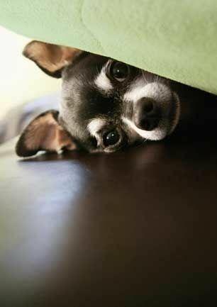 Süße Hunde Bilder Zum Ausdrucken Für Whatsapp - Süße Hunde Bilder Zum Ausdrucken Für Whatsapp
