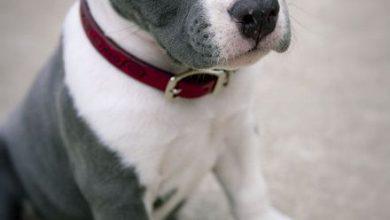 Süße Hunde Bilder Zum Ausdrucken Kostenlos 390x220 - Süße Hunde Bilder Zum Ausdrucken Kostenlos