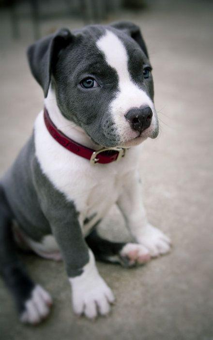 Süße Hunde Bilder Zum Ausdrucken Kostenlos - Süße Hunde Bilder Zum Ausdrucken Kostenlos