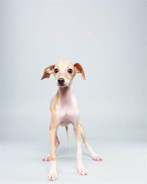 Süße Hunde Bilder Zum Ausdrucken - Süße Hunde Bilder Zum Ausdrucken