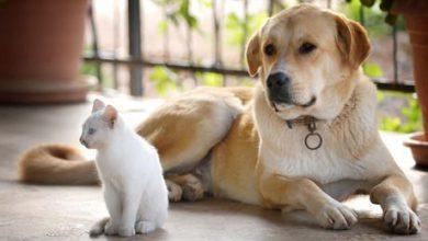 Süße Hundebaby Bilder Für Whatsapp 390x220 - Süße Hundebaby Bilder Für Whatsapp