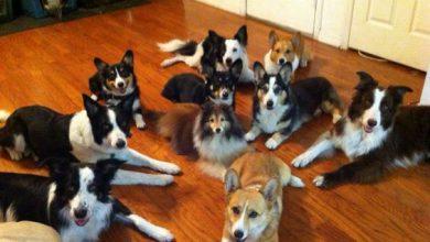 Süße Hundebaby Bilder Kostenlos 390x220 - Süße Hundebaby Bilder Kostenlos
