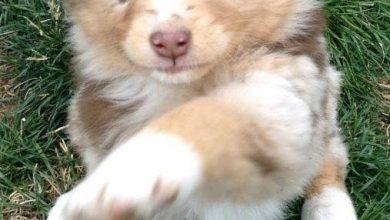 Süße Hundebilder Für Facebook 390x220 - Süße Hundebilder Für Facebook