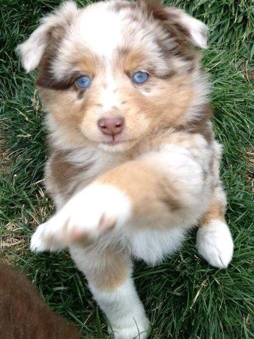Süße Hundebilder Für Facebook - Süße Hundebilder Für Facebook