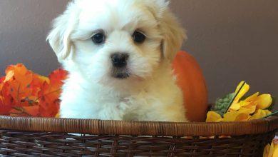 Süße Hunderassen 390x220 - Süße Hunderassen